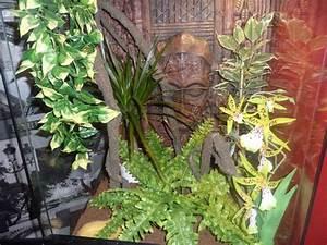 Acheter Terrarium Plante : terrarium phelsuma lineata ~ Teatrodelosmanantiales.com Idées de Décoration