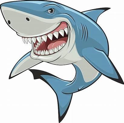 Shark Vector Clip Illustrations Sharks Tiger Whale