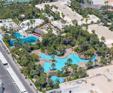 the secret garden las vegas las vegas welcomes baby dolphin las vegas review journal