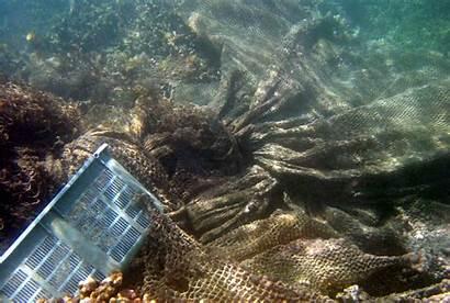 Debris Coral Litter Marine Reefs Help Save