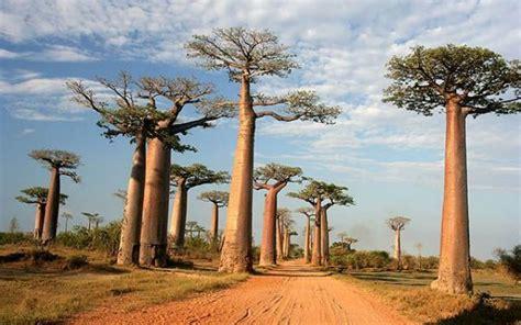 Viaggi - Route Nationale 8 - La via dei baobab in ...