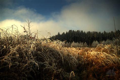 bäume als sichtschutz die 55 besten winterlandschaft hintergrundbilder