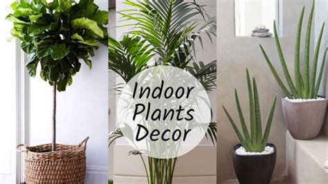 Home Decor Plants-wonderful Interior Design For Home