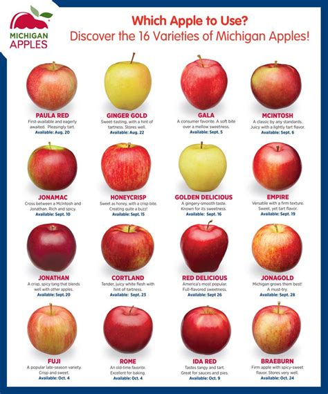 16 Types of Apples from Michigan | Healthy Family Project