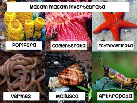 Sistem Pernapasan Pada Hewan Invertebrata beserta ...