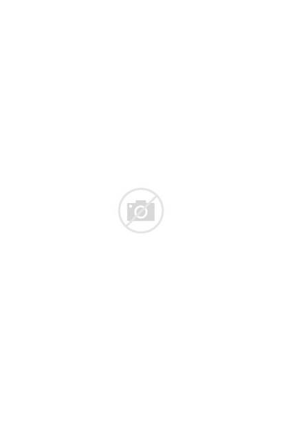 Container Gardening Planting Combination Lovely Garden Homyhomee