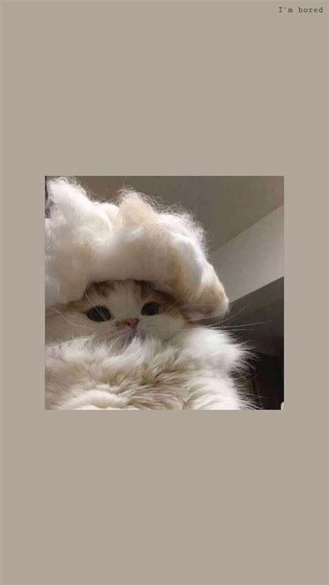 uwu hintergruende katzen tapeten lustiger