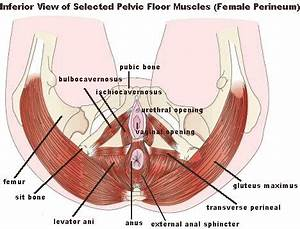 pelvic floor muscle and nerve damage females left side hip With pelvic floor pain pregnancy