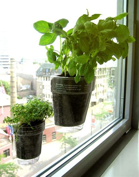 Windowsill Pots For Herbs by Window Herbs Suction Cup Planters Windowsill And Pots