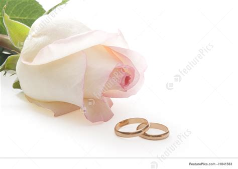 picture of isolated rose and wedding rings