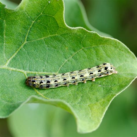 10 worst garden insect pests and how to get rid of them the family handyman
