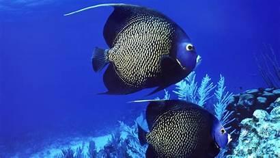 Ocean Underwater Sea Animals Fish Tropical Fishes