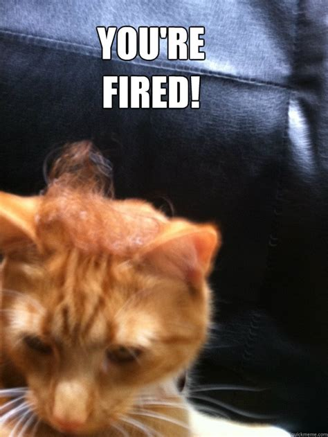 You Re Fired Meme - you re fired donald trumpz quickmeme
