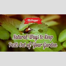 Natural Ways To Keep Pests Out Of Your Garden Msprepper