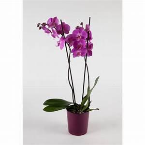 Cache Pot Orchidée : reynaud fleurs ricamarie orchid e phalaenospis ~ Teatrodelosmanantiales.com Idées de Décoration
