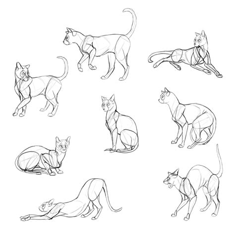 draw cats monika zagrobelnas detailed approach