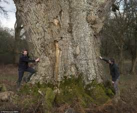 Greatest collection of medieval oak trees in Europe in ...