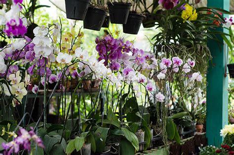 bunga anggrek pasar satwa  tanaman hias yogyakarta