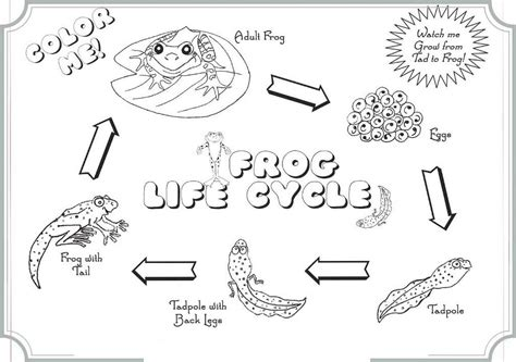 Cycle Of A Frog Coloring Page The Cycle Of Frog Coloring Books