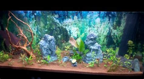 aquarium 180l quel poisson pour d 233 butant facile 224
