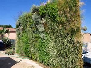 Mur Végétal Extérieur : mur v g tal gramin es ~ Premium-room.com Idées de Décoration