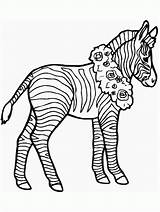 Coloring Zebra Pages Printable Popular sketch template