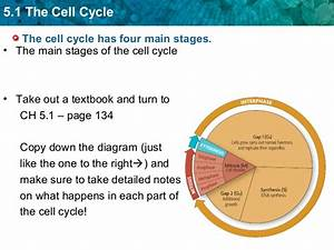 The Cell Cycle Notes 5 1