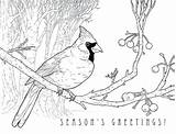 Cardinal Coloring Printable Cardinals Pages Christmas Louis St Bird Karyn Lewis Holiday Fredbird Drawing Template Illustrated Designs Books Getcolorings Illustration sketch template