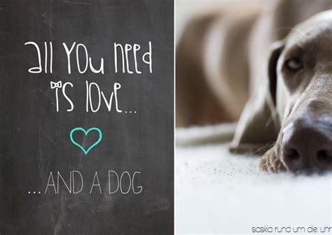saskiarundumdieuhr hundeliebe