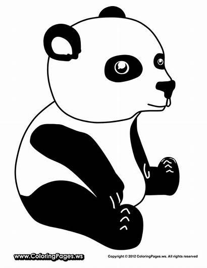 Panda Coloring Pages Sheets Pandas Giant Animal