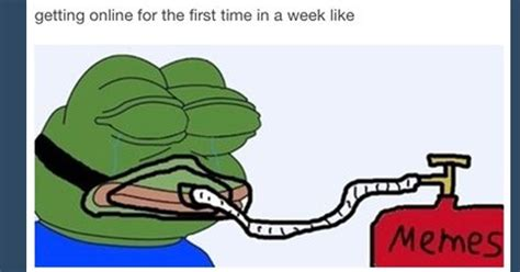 Funny Pepe Meme - pepe memes funny image memes at relatably com