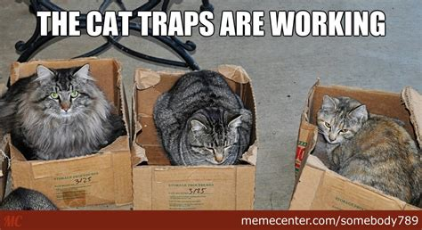 Cat Trap Meme - the cat traps are working by recyclebin meme center
