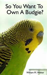 Introducing A New Parakeet Into Your Flock