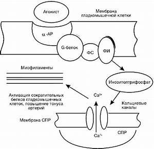 Высокое диастолическое давление и пульс причины и лечение