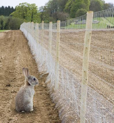 best rabbit fencing rabbit proof garden fencing lovetoknow