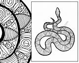 Snake Coloring Animal Zentangle Sheet Pdf Colouring Adult Sketch sketch template