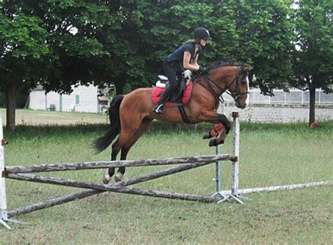 ensemble chevaux bai