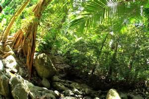 Visiting Australia's Daintree Rainforest • The Blonde Abroad