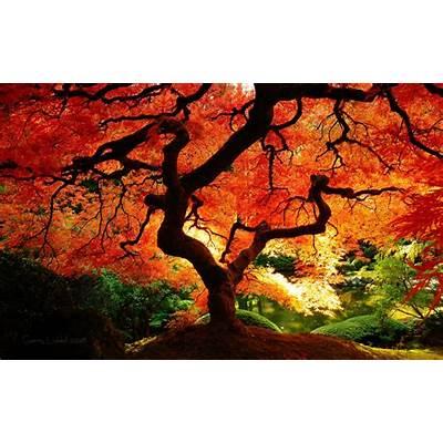 Beautiful autumn treeAutumn SplendorPinterest