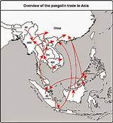 Histroy of asian trade in 1500