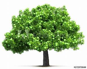 green apple tree isolated 3D illustration - Buy this stock ...