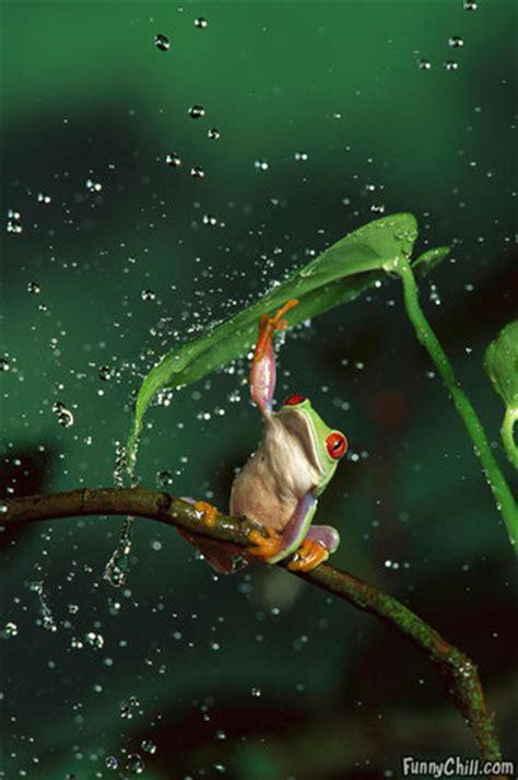 animal humor images rain rain   hd wallpaper