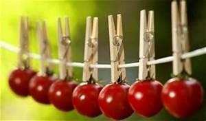 Grüne Tomaten Nachreifen : tomaten pflanzen einfache tipps f r eine reiche ernte ~ Lizthompson.info Haus und Dekorationen
