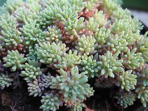Plante Succulente Espèces Représentatives : une succulente collection chronique d 39 une sculpture ~ Nature-et-papiers.com Idées de Décoration