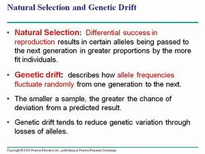 Natural Selection And Genetic Drift