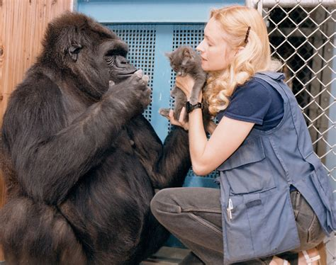 Koko dead at 46. Gorilla knew sign language