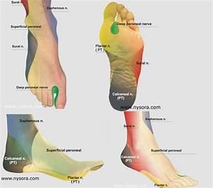 Orthopaedics  U0026 Traumatology