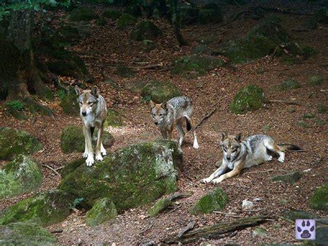 photos de maison des loups 224 orlu 09110