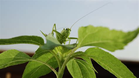 insektenspray gegen bienen insektenspray f 252 r pflanzen energie tipp