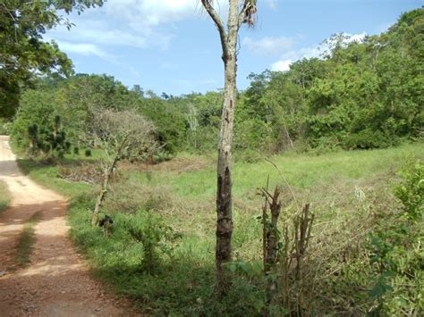 commercialfarm land  sale  browns town st ann